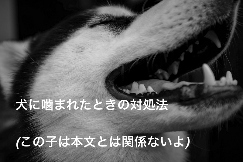 犬に噛まれたときの対処法