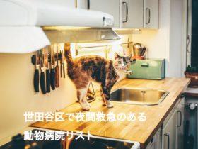 世田谷区夜間救急動物病院リスト