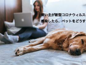 飼い主が新型コロナウィルスに感染したらペットをどうする